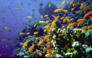 Korallenriff_Eilat