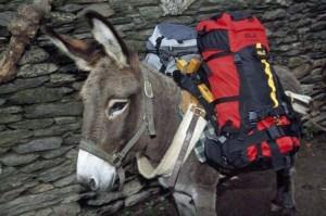 Terroristen wollten Soldaten mit einem mit Sprengstoff beladenen Esel angreifen. (Archivbild)