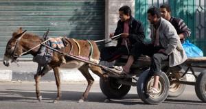 Bald gibt es keine Eselkarren mehr auf Israels Straßen. (Symbolbild) Foto: harryfear / flickr | CC-BY-NC-SA 2.0